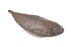 Whole single fresh sole fish Stock Photography