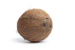 Whole single hairy coconut Royalty Free Stock Images