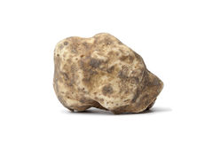Whole single white truffle Royalty Free Stock Photos