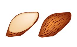 Whole and Slice Almonds on White Background Stock Photo