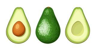 Whole and sliced avocado fruit. Vector illustration. Royalty Free Stock Photo