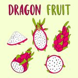 Whole and sliced Dragon Fruit isolated on light background. Hand drawn vector illustration Royalty Free Stock Photography