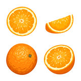 Whole and sliced orange fruits isolated on white. Vector illustration. Royalty Free Stock Photo