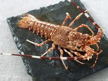 Whole spiny lobster Royalty Free Stock Images