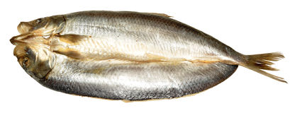 Whole Split Kipper. A whole smoked Manx style split kipper, isolated on a white background Stock Photography