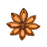 Whole star anise isolated on white background hand drawn aromatic spice food and seasoning aniseed aroma condiment Royalty Free Stock Image
