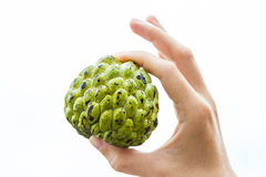 Whole Sugar-apple in Hand. A whole sugar-apple fruit held in the hand of a young woman, isolated on white Stock Photography