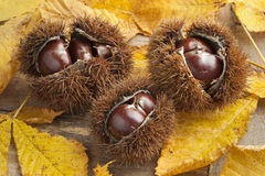 Whole sweet chestnuts Stock Image