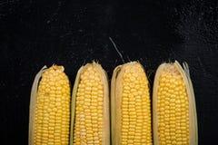 Whole sweetcorn cob on dark background Stock Images