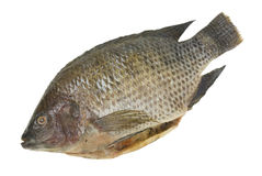Whole Tilapia Fish Isolated Stock Photo