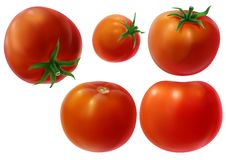 Whole tomatoes illustration Royalty Free Stock Photo