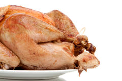 Whole turkey on white background Royalty Free Stock Photography