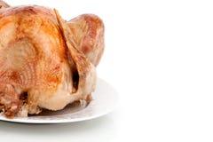 Whole turkey on white background Royalty Free Stock Photography