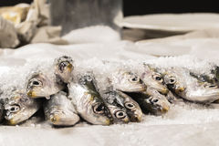 Whole uncooked fish Stock Photography