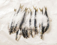 Whole uncooked fish Royalty Free Stock Images
