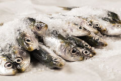 Whole uncooked fish Royalty Free Stock Image