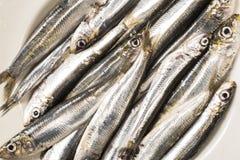 Whole uncooked sardines Stock Photos