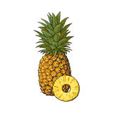 Whole, unpeeled, uncut, vertical pineapple and peeled round slice Royalty Free Stock Images