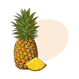 Whole, unpeeled, uncut, vertical pineapple and wedge formed slice. Sketch style vector illustration with place for text. Realistic hand drawing of whole and Royalty Free Stock Photography