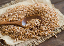 Whole unpolished spelt in a with a spoon Royalty Free Stock Photography