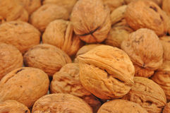 Whole walnut Royalty Free Stock Photos