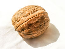 Whole walnut Royalty Free Stock Photography