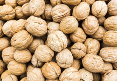 Whole walnuts Stock Photography