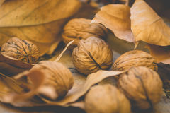 Whole walnuts scattered on wood surface, yellow and brown dry autumn leaves, harvest, thanksgiving, halloween Royalty Free Stock Photos