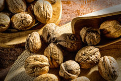 Whole walnuts in shell. On burlap with wooden tray and scoop Royalty Free Stock Photography