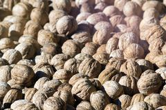 Whole walnuts in shell. Ripe walnuts dried in the sun during the day royalty free stock image
