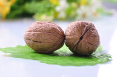 Whole walnuts with shell Stock Image