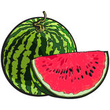 Whole watermelon and red slice with black seeds, sketch illustration. Whole striped watermelon with curled up tail and red slice with black seeds, sketch style Stock Photos