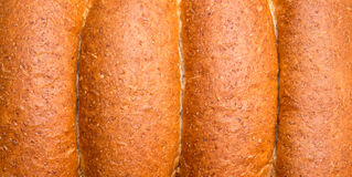 Whole wheat buns Stock Photography