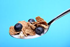 Whole wheat cereal flakes with blueberries. On spoon, isolated on blue background royalty free stock photo