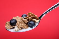 Whole wheat cereal flakes & blueberries on spoon. A spoon with whole wheat cereal flakes and blueberries in milk, isolated on a red background royalty free stock image
