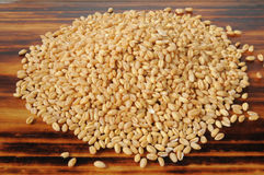 Whole wheat kernels Stock Image