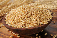 Whole wheat kernels Stock Photo
