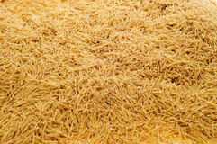 Whole wheat noodles Royalty Free Stock Image