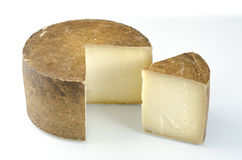 Whole wheel of sheep milk cheese. Stock Image