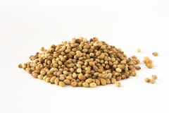 Whole white dhania coriander. Whole dhania coriander, isolated on white. Shallow depth of field, focused on the centre of the pile Royalty Free Stock Photography