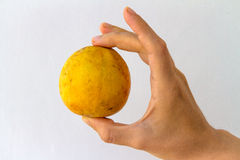 Whole Yellow Guava in Hand. A whole guava fruit held in the hand of a young woman, isolated on white Stock Images