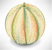 Whole yellow melon Stock Image