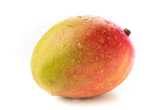 Whole yellow and red mango. One whole ripe spotted mango with water droplets on a white background Stock Images