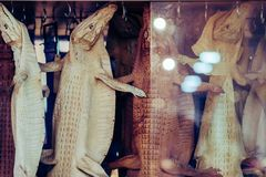 The whole young crocodile leather is hung for sale to be used in stuffed animals stock photo