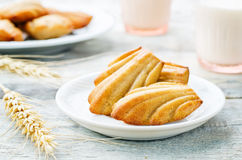 Wholegrain Madeleine Royalty Free Stock Photography
