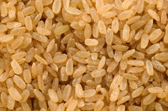Wholegrain rice Stock Images