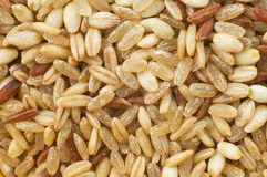 Wholegrain rice with barley and oats Royalty Free Stock Image