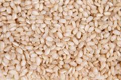 Wholemeal ρύζι Στοκ εικόνες με δικαίωμα ελεύθερης χρήσης