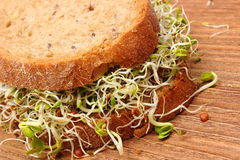 Wholemeal bread with alfalfa and radish sprouts Royalty Free Stock Photography