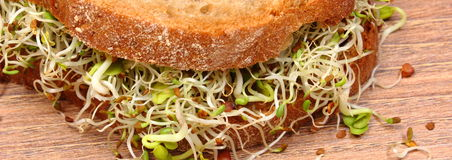 Wholemeal bread with alfalfa and radish sprouts Royalty Free Stock Photo